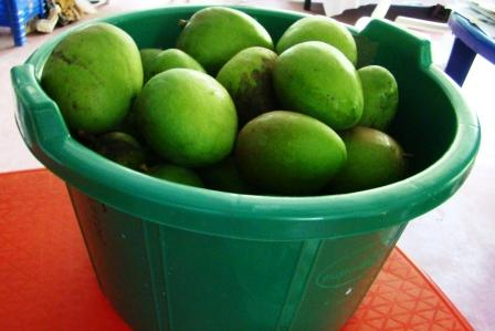A Bucket of Mangoes